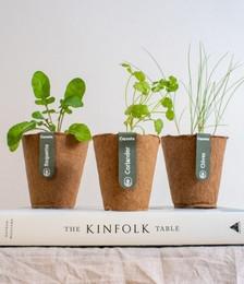 Paris-Shanghai Veganic Seed Kit
