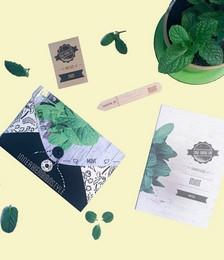 Mint Herb Growing Kit
