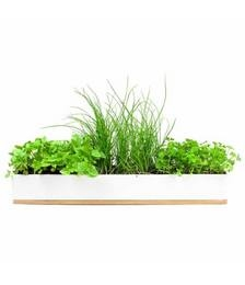 Micro Herbs Windowsill Grow Kit