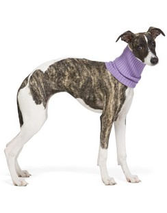 Purple Nonna Turtleneck Dog Collar